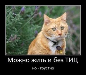 WpMen - Как я встретился и расстался с ТИЦ от Yandex.